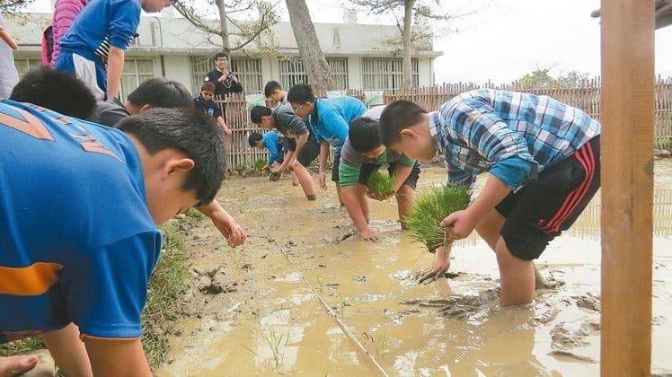 聯合報-學校有塊田… 小學生插秧玩農趣
