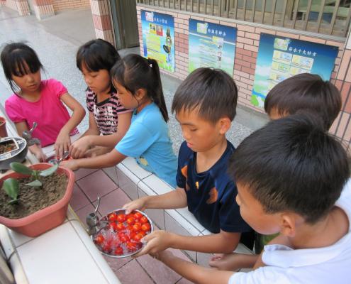 我們採番茄時,大家都很興奮,我們採完後送給畢業生,我希望以後還有機會採收番茄。