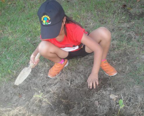 灑下稻穀真好玩。