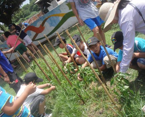 四甲的學生們努力的拔草。