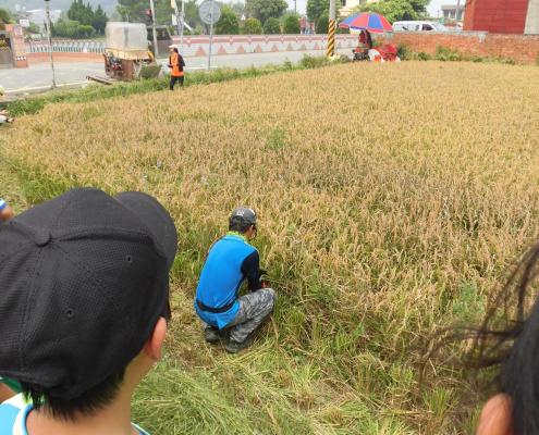 仔細聽著場長教學怎麼割稻