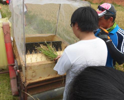 我們使用打穀機讓稻子變成稻穀