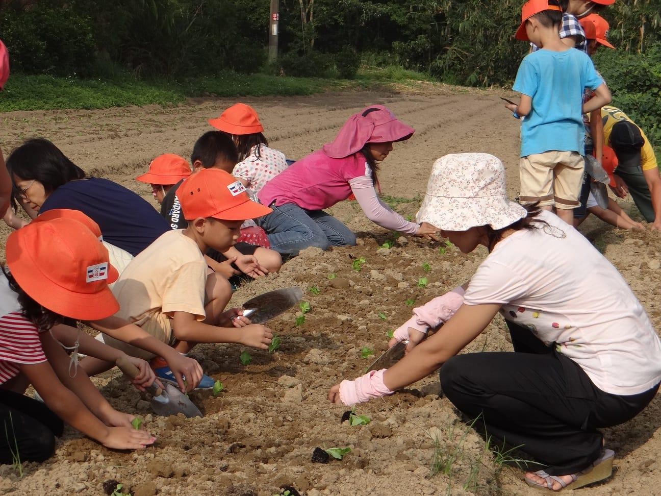 種下小菜苗,期待它快快長大。