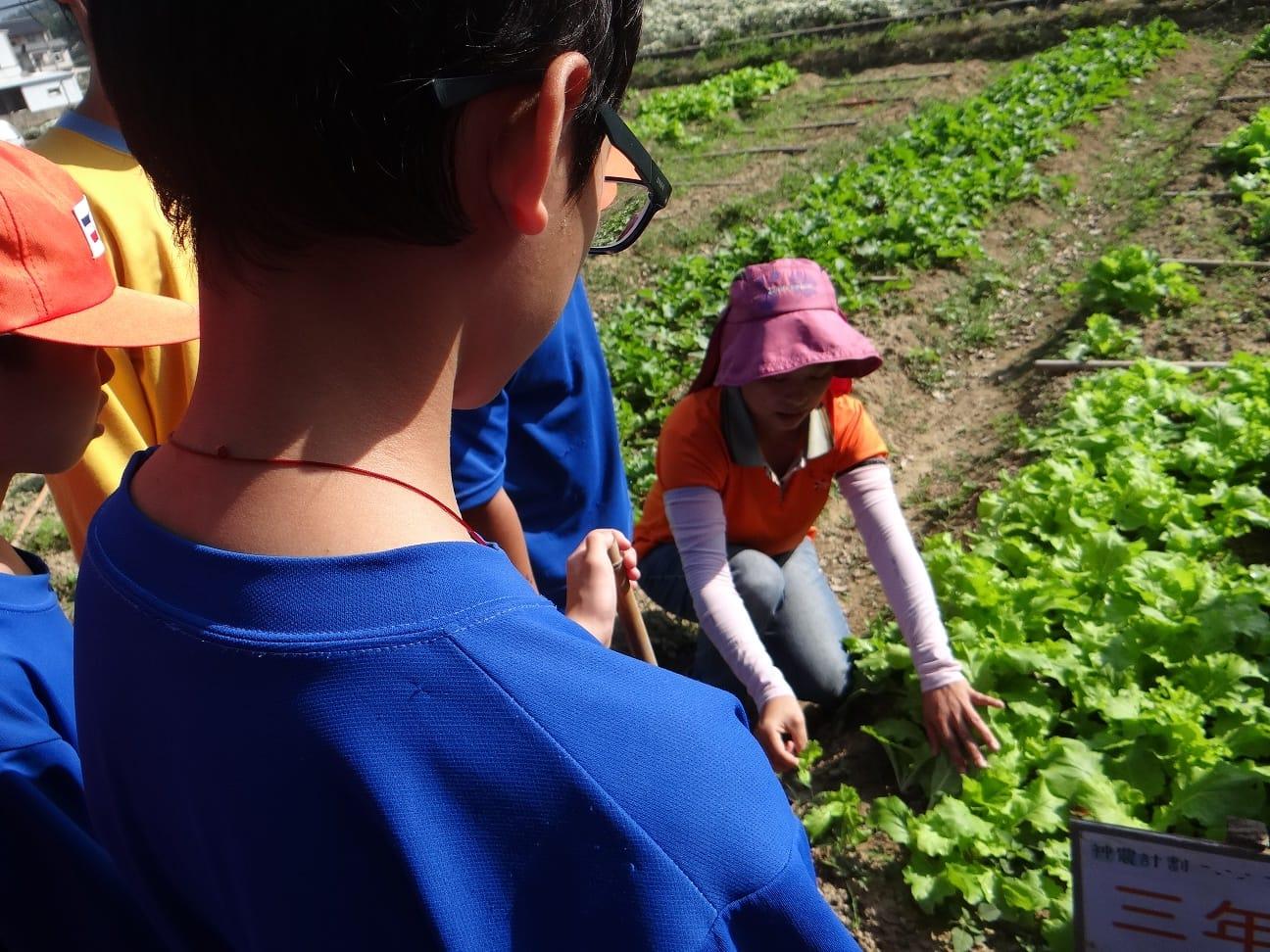 教導孩子們如何採收蔬菜